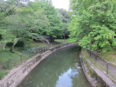 琵琶湖疏水の遊歩道