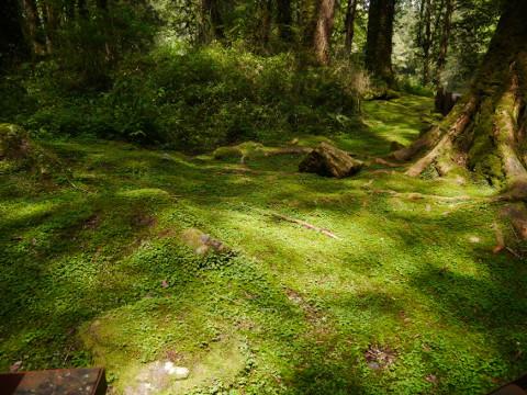阿里山の森