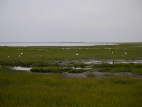 高美湿地の水鳥