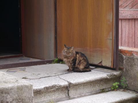 ウラジオストクの猫