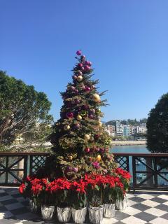 ルートヴィヒビアホールの前のクリスマスツリー